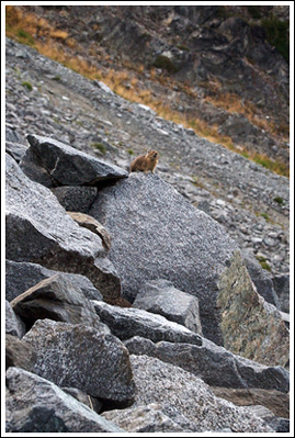 A pika's perch.